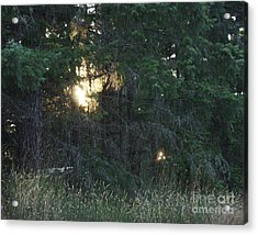 Sunlight Orbs 3 Acrylic Print by Jane Whyte