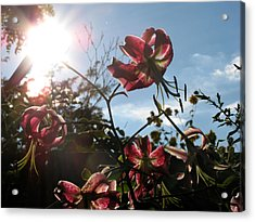Sunlight Through Flowers Acrylic Print