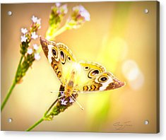 Sunlit Beauty Acrylic Print by Barry Jones