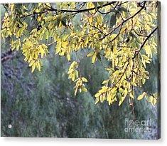 Sunlit Tree Acrylic Print
