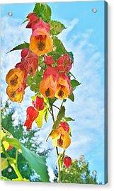 Sunny Bells Acrylic Print