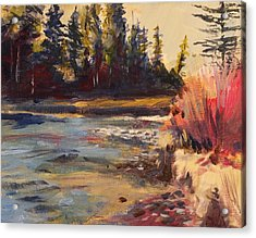 Sunny Colorado Wooded Stream Acrylic Print