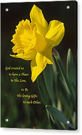 Sunny Daffodil With Quote Acrylic Print