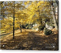 Sunny Day In The Autumn Park Acrylic Print by Michal Boubin