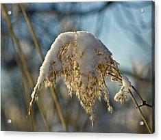 Sunny Day Snow Fall On The Bull Rushes Acrylic Print by LeeAnn McLaneGoetz McLaneGoetzStudioLLCcom