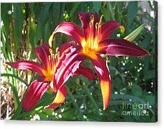 Sunny Daylilies Acrylic Print by Tina Ann Byers
