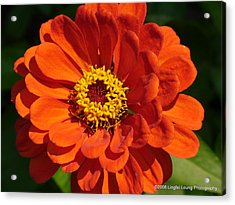 Acrylic Print featuring the photograph Sunny Delight by Lingfai Leung