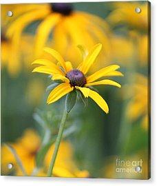 Sunny Flower - 2 Acrylic Print by Marilyn West
