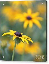 Sunny Flower Acrylic Print by Marilyn West