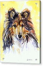 Sunny Sheltie Acrylic Print by Lyn Cook