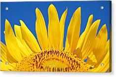 Sunny Skies Acrylic Print by Amy Schauland