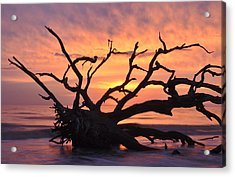Sunrise At Driftwood Beach 6.1 Acrylic Print