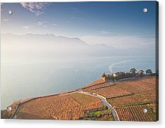 Sunrise At Lavaux Vineyard Terraces Acrylic Print by Harri's Photography