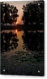 Sunrise From My Pad Acrylic Print by Dan Wells