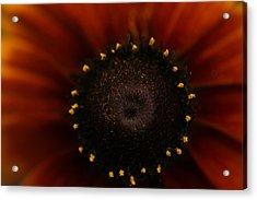 Sunrise Acrylic Print by Gabriel Calahorra