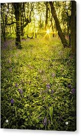 Sunrise In Bluebell Woods Acrylic Print by Amanda Elwell