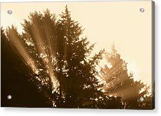 Sunrise In Sepia Acrylic Print