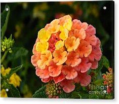 Sunrise Inspired Flower Acrylic Print by Sara  Mayer