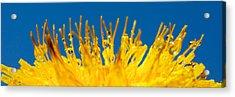 Sunrise Acrylic Print by Lisa Knechtel