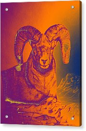 Sunrise Ram Acrylic Print by Mayhem Mediums