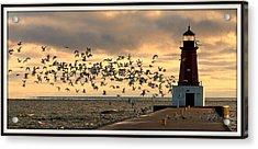 Sunrise Seagulls 219 Acrylic Print by Mark J Seefeldt