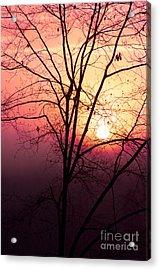 Sunrise Sunset Acrylic Print by Kim Fearheiley