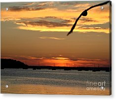 Acrylic Print featuring the photograph Coming Home by Katy Mei