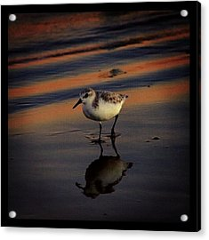 Sunset And Bird Reflection Acrylic Print