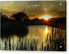 Sunset And Cattails Acrylic Print by Tam Ryan