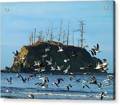 Acrylic Print featuring the photograph Sunset Bay Scape And Gulls by Cindy Wright