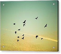 Sunset Birds Acrylic Print by Sarah Palmer