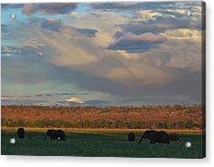 Sunset Chobe River Acrylic Print