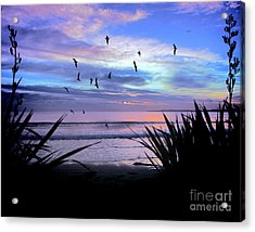 Sunset Down Under Acrylic Print by Karen Lewis