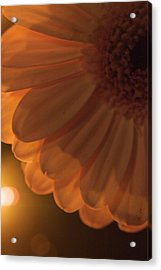 Sunset Flower Acrylic Print by JM Photography