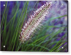 Acrylic Print featuring the photograph Sunset Garden by Harvey Barrison