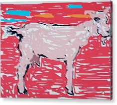 Sunset Goat Acrylic Print by Jay Manne-Crusoe