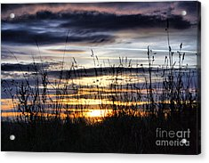 Sunset Grasses Acrylic Print by Sandra Cockayne