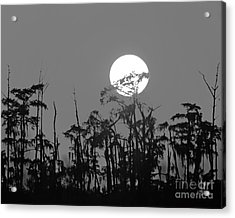 Acrylic Print featuring the photograph Sunset In Swamp by Luana K Perez