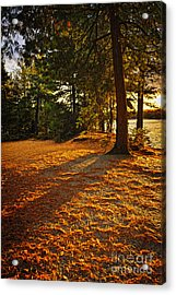 Sunset In Woods At Lake Shore Acrylic Print by Elena Elisseeva