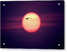 Sunset Acrylic Print by John Foxx
