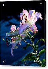 Sunset Lily Acrylic Print by Patrick Witz