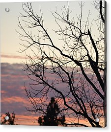 Sunset Of Winter's Beauty Acrylic Print by Naomi Berhane