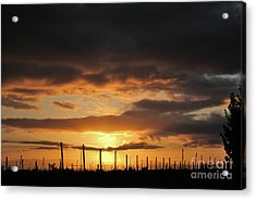 Sunset On The Vineyards Acrylic Print by Nancy Chambers