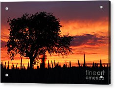 Sunset Over The Meadows Acrylic Print by Clare Scott