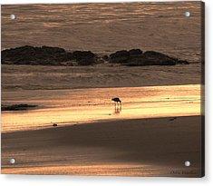 Sunset Shimmer Beach Acrylic Print by Debra     Vatalaro