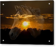 Sunset Silhouette Acrylic Print by Lisa Moore