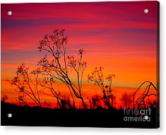 Sunset Silhouette Acrylic Print by Patrick Witz