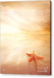 Sunset Star Fish Acrylic Print by Lee-Anne Rafferty-Evans
