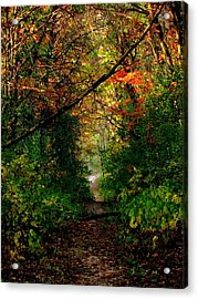 Sunset Through Trees Acrylic Print by Bridget Johnson