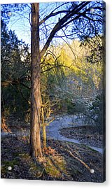 Sunset Tree Acrylic Print by Marty Koch